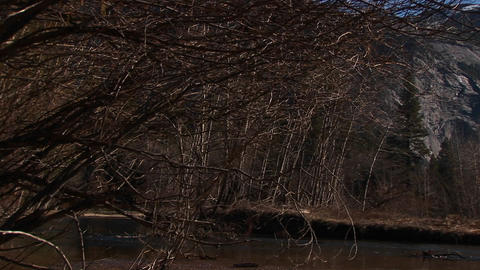 A look at bare trees and rocks with a stream rushing... Stock Video Footage