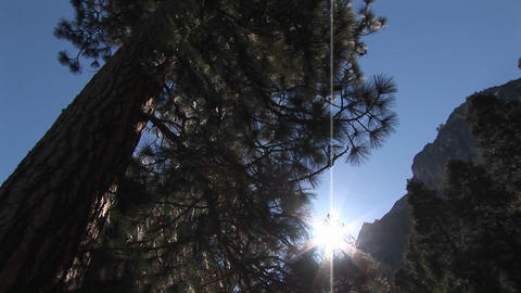 The camera is looking up through pine trees to the... Stock Video Footage