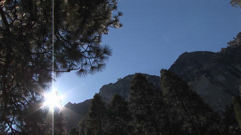 The camera is looking up through pine trees to the surrounding mountaintops Footage