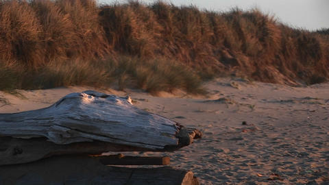 A close-up of driftwood shaped like a fossilized reptile... Stock Video Footage