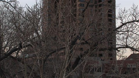 The camera pans upward from eye-level branches to a high-rise in the distance Footage