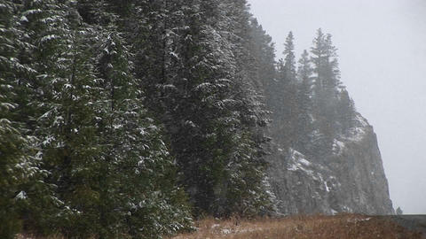 A steep, partial view of a wooded mountainside in a snow storm Footage