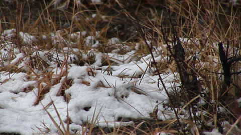 Snow falls on decaying ground cover Stock Video Footage
