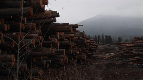 Snow falls lightly and recently cut and stacked lumber harvested from the nearby mountain Footage