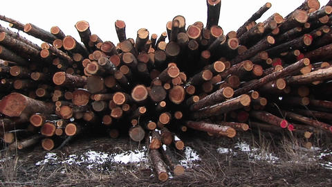 The camera pans stacks of cut logs of various lengths, some marked red on the ends Footage