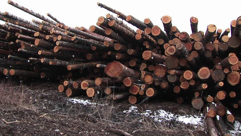 The camera pans stacks of cut logs of various lengths,... Stock Video Footage