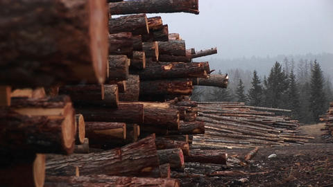 Close-up of stacked logs in a lumberyard Footage