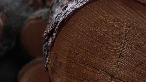 An extreme close-up of cut logs with saw-marks, rings and... Stock Video Footage