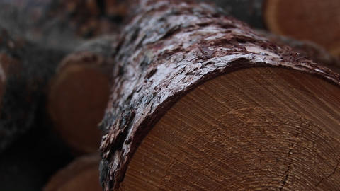 An extreme close-up of cut logs with saw-marks, rings and bark Footage