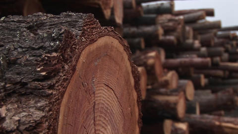 An extreme close-up of a log in a stack of cut timber Stock Video Footage