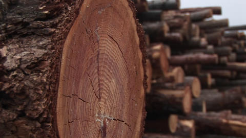 An extreme close-up of a log in a stack of cut timber Footage
