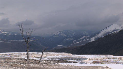 A lone tree adds interest to this otherwise stark winter... Stock Video Footage