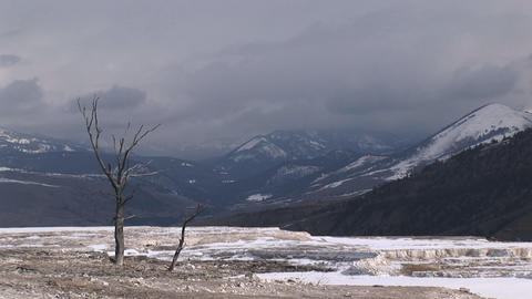 A lone tree adds interest to this otherwise stark winter landscape Footage