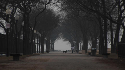 In an urban park with wide pathways, a black dog and two... Stock Video Footage