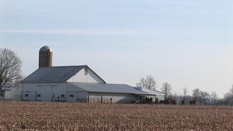 Livestock graze in the distance near a barn Stock Video Footage
