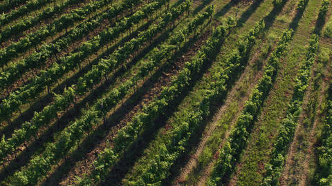 Aerial - Tilt up from the vineyard rows to the sunset Footage
