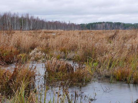 Frozen marsh. Movement on slider. Russia Live Action