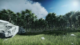 Oil Palm Tree Plantation against timelapse clouds Animation