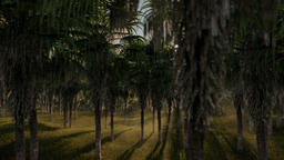 Oil Palm Tree Plantation against beautiful sunrise, fly through Animation