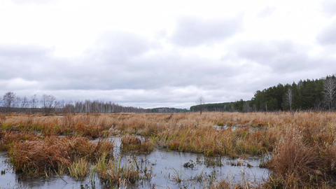Frozen marsh. It's cloudy. Movement on slider. Russia Live Action