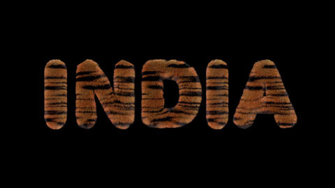 3d animated text spelling INDIA, made of fury Tiger striped letters Animation