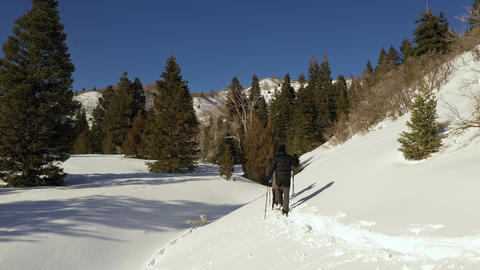 Two people snowshoeing with their dog on sunny day Live Action