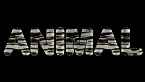3d animated text spelling animal, made of fury zebra striped letters Animation
