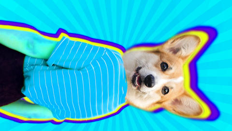 Vertical animation of corgi dog head dancing body. Bright pop colors make this trendy video Animation