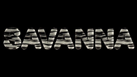 3d animated text spelling savanna, of fury zebra striped letters Videos animados