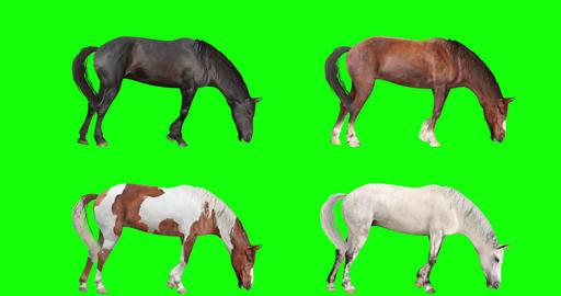 Four Horses Grazing Videos animados