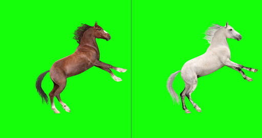Two Horses, Various Actions Videos animados
