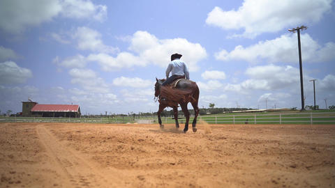 Stallion brown horse run at ranch. Slow motion shot of horse rider outback at Acción en vivo