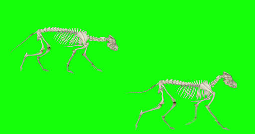 Animated Wolf Skeleton CG動画
