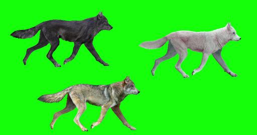 Three Wolves Looping Gaits CG動画