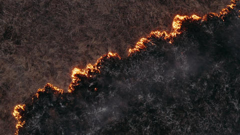Natural disaster, fire burns dry grass in the field, destruction of nature. Epic Live Action