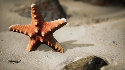 red starfish on ocean beach with golden sand Live Action
