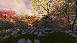 Spring forest, timelapse sunrise, camera fly Animation
