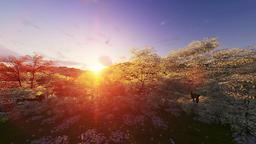 Spring forest, mountain and lake, sunrise, camera tilt Animation