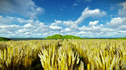Wheat field against beautiful timelapse clouds Animation