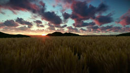 Wheat field against beautiful timelapse sunrise, camera fly Animation