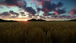 Wheat field against beautiful timelapse sunrise, camera fly Animation