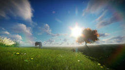 Beautiful horse and tree of life against timelapse clouds Animation