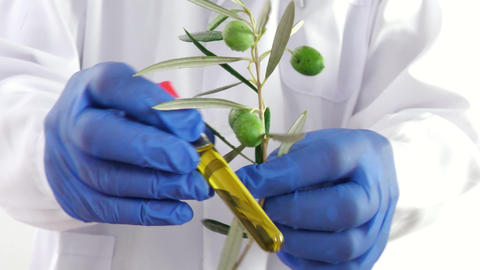 Medical analyst checks a branch of olives and oil for laboratory analysis Live Action