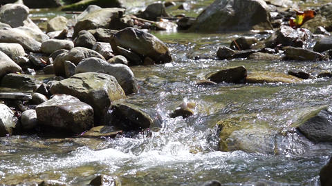 Water Flow of a Shallow Stony River. Slow Motion Live Action