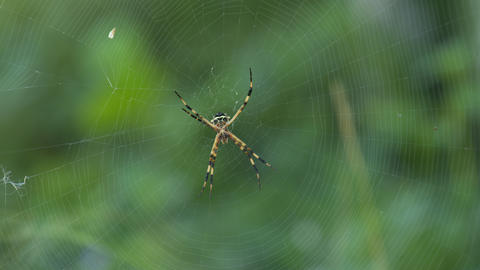Spider with black and yellow body and legs in the center of its フォト