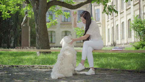 Happy young brunette woman stroking head of white dog and talking. Portrait of Live Action