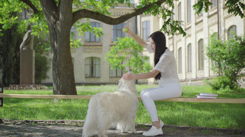 Wide shot portrait of cheerful young woman and white dog having fun on sunny Live Action