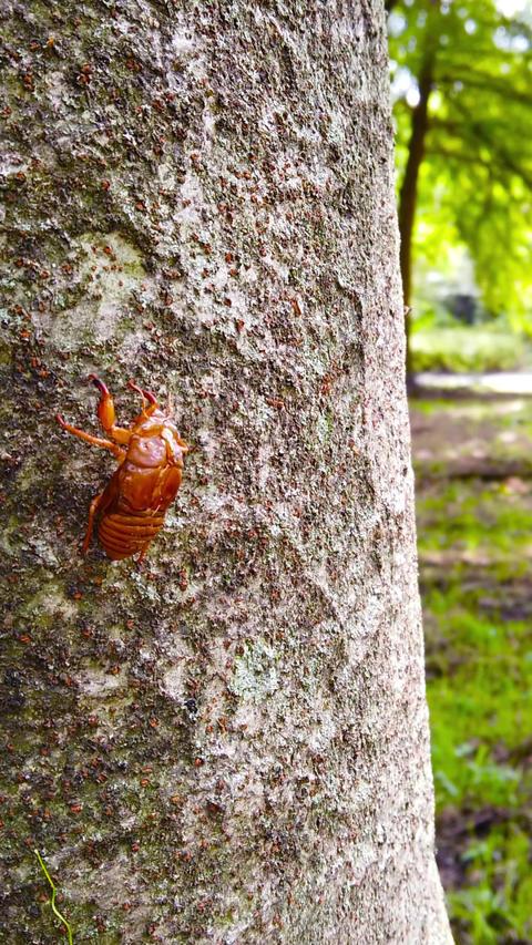 Cicada shells_portrait Live Action