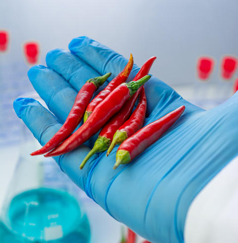 Analysis doctor holds red chillies Fotografía