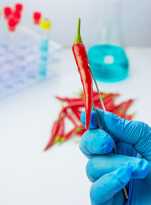 Analysis doctor holds a red chili pepper Fotografía